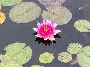 Waterlelie - Be yourself